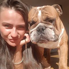 Enzo English Bulldog