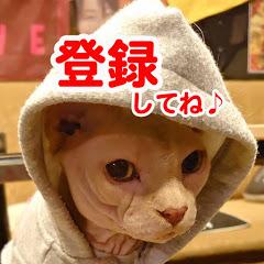【リアル犬猫活動】にゃいるどはーと