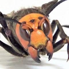 蜂ハンターフーガ