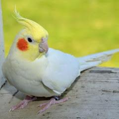هواة الطيور