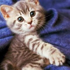 CuteVN Animals