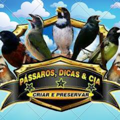 PASSAROS, DICAS & CIA