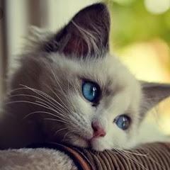 Kucing Yatim