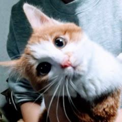 野良猫憩いの場放送局タナカックス