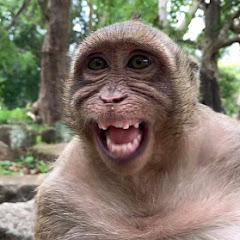 SR Monkey Daily