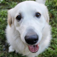 Funny Dog Bailey