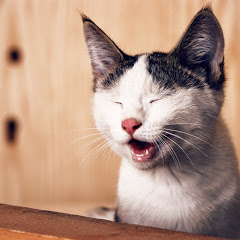 Cat's Funny Viral Video's