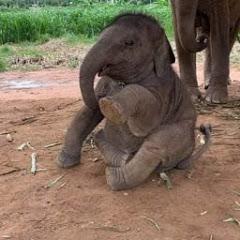 ช้างพลายดาว มงคล