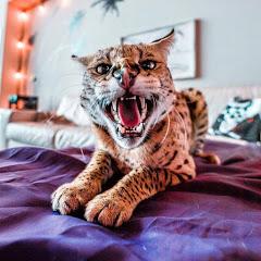 Stryker The Cat