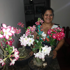 Catiana Pereira Rosas do Deserto
