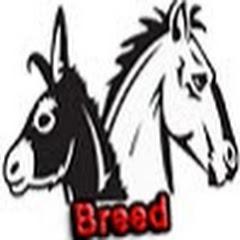 Horse Donkey Breed