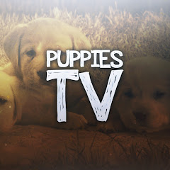 Puppies TV