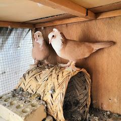 السطح المميز للطيور
