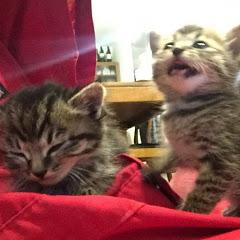 Cute kitten(双子の子猫のわんぱく日記)