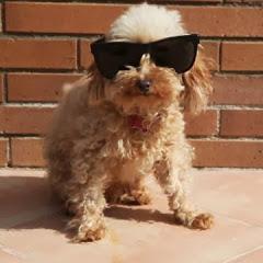 Brit The Cute Dog