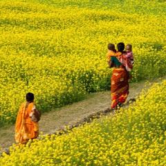 Green Bangladesh