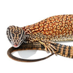 Pace Reptiles