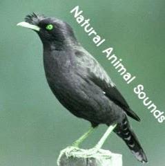 Natural Animal Sounds