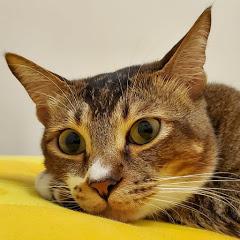 草根貓 Grassroots Cat