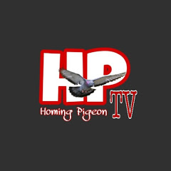 Homing Pigeon TV