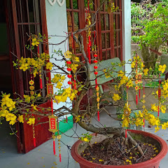 bonsai Thanh Tâm