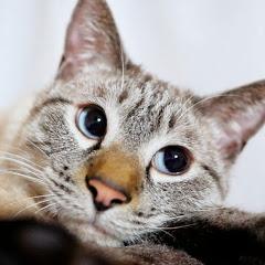 猫のデュフィの日常【サブチャンネル】