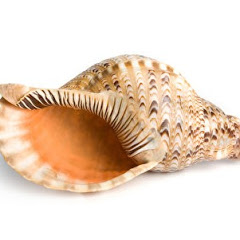神奇不神奇海螺