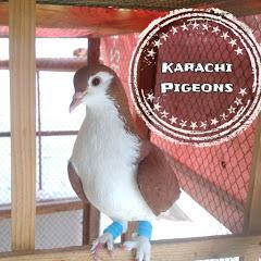 Karachi Pigeons