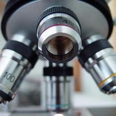 Pod Mikroskopem