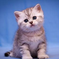 Kitten Archie