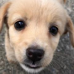 똑똑독 Knockknockdog