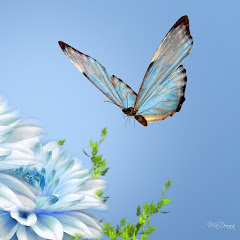 Tarot de las Mariposas