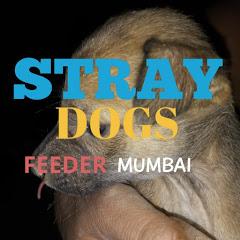 Stray Dogs Feeder