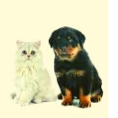 Pets e Animais Fofos