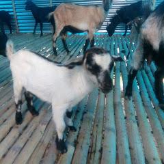 Bismillah Goat Farm