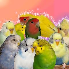 Семейка попугайчиков
