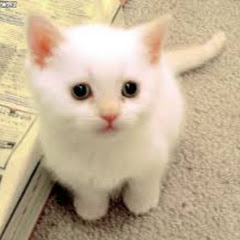 Aww Why Lucky Paws CuteVN Cute World Kittens