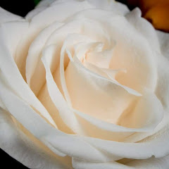 White Rose Guidance