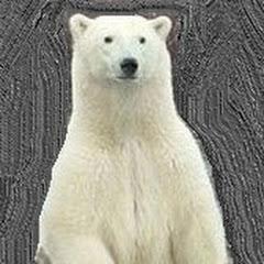 곰스테리-소름돋는실화TV