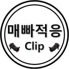 매빠적응 clip