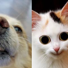 Animals' Funniest