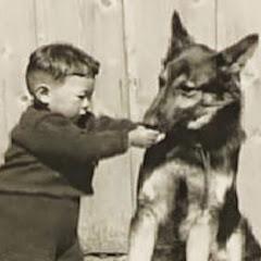 犬 しつけ 犬のしつけ