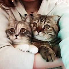 도미네 고양이집 - 여섯마리 폴드가족 :D