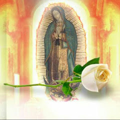 La Rosa de Guadalupe - Capítulos