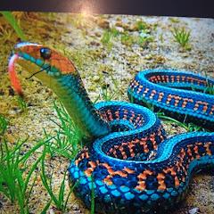 rainbow snake gaming