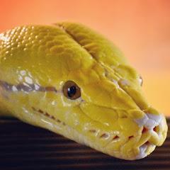 大蛇LOUNGE
