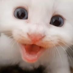 펜션 고양이랑
