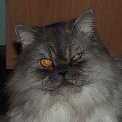 Дом Большой кошки