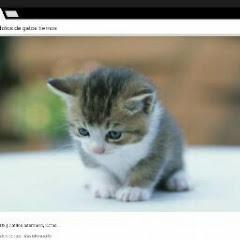 el mundo de los gatos y gatas