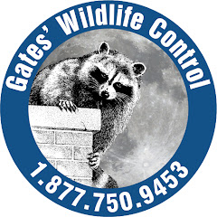 Gates Wildlife Control